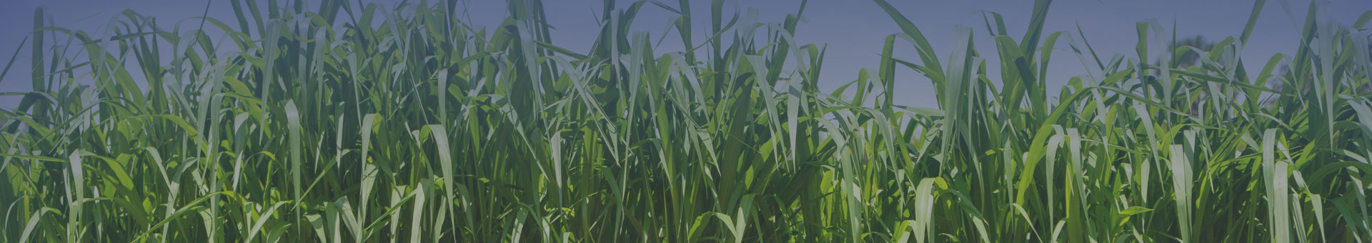 about us sugarcane banner